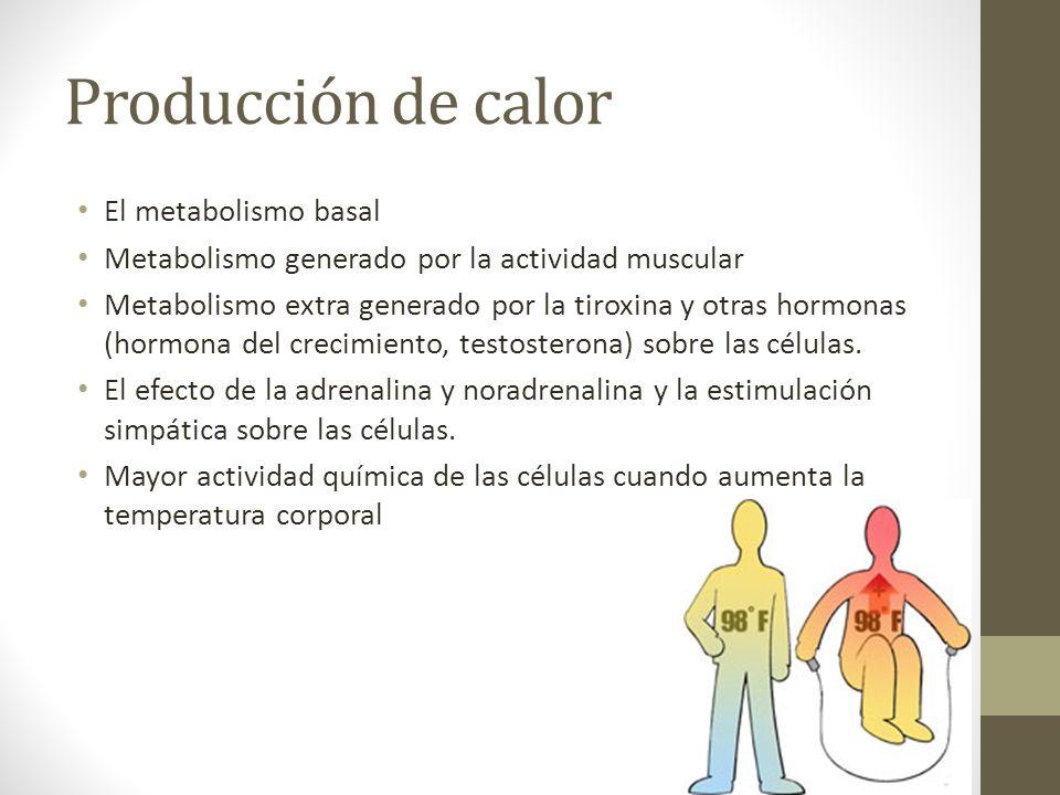 Producción de calor El metabolismo basal