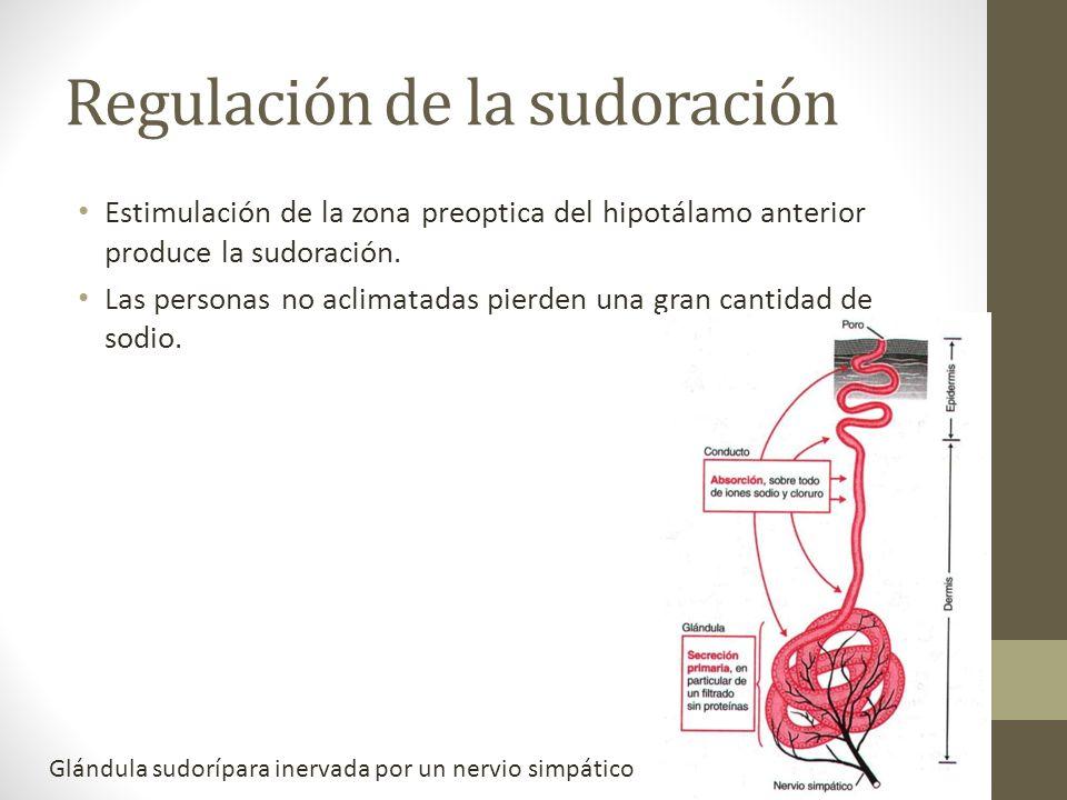 Regulación de la sudoración