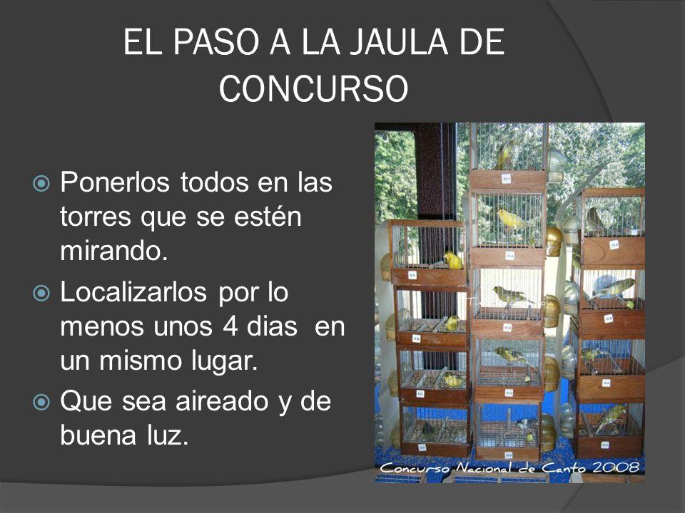 EL PASO A LA JAULA DE CONCURSO