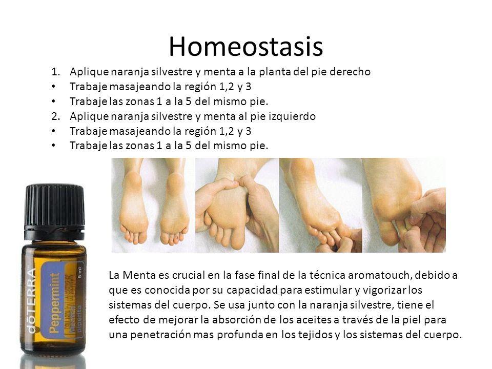 Homeostasis Aplique naranja silvestre y menta a la planta del pie derecho. Trabaje masajeando la región 1,2 y 3.