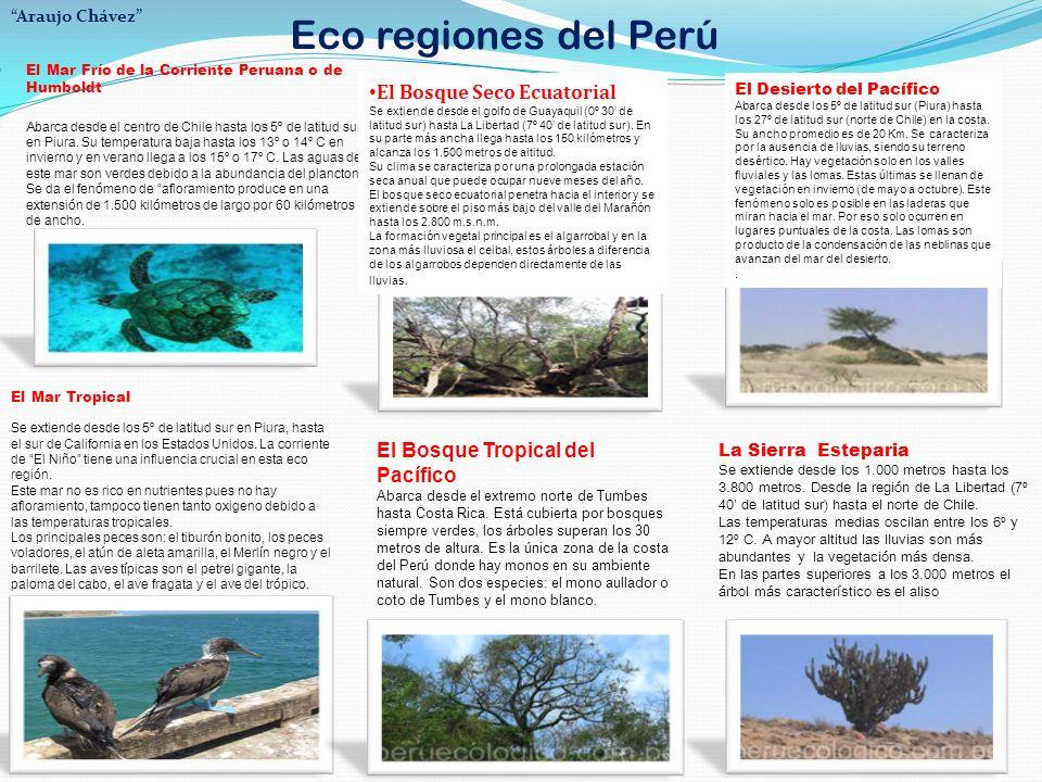 Eco regiones del Perú Araujo Chávez El Mar Frío de la Corriente Peruana o de Humboldt.
