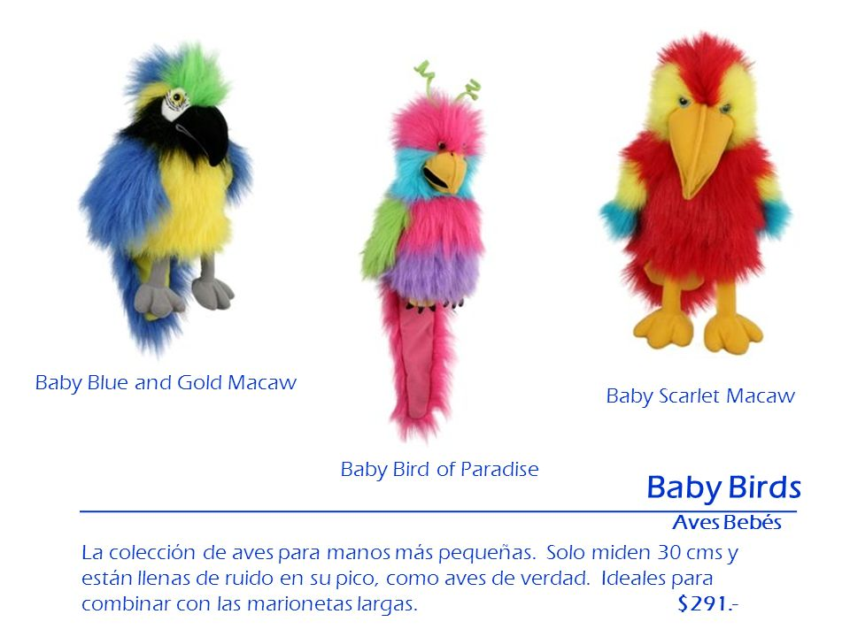 Baby Birds Baby Blue and Gold Macaw Baby Scarlet Macaw