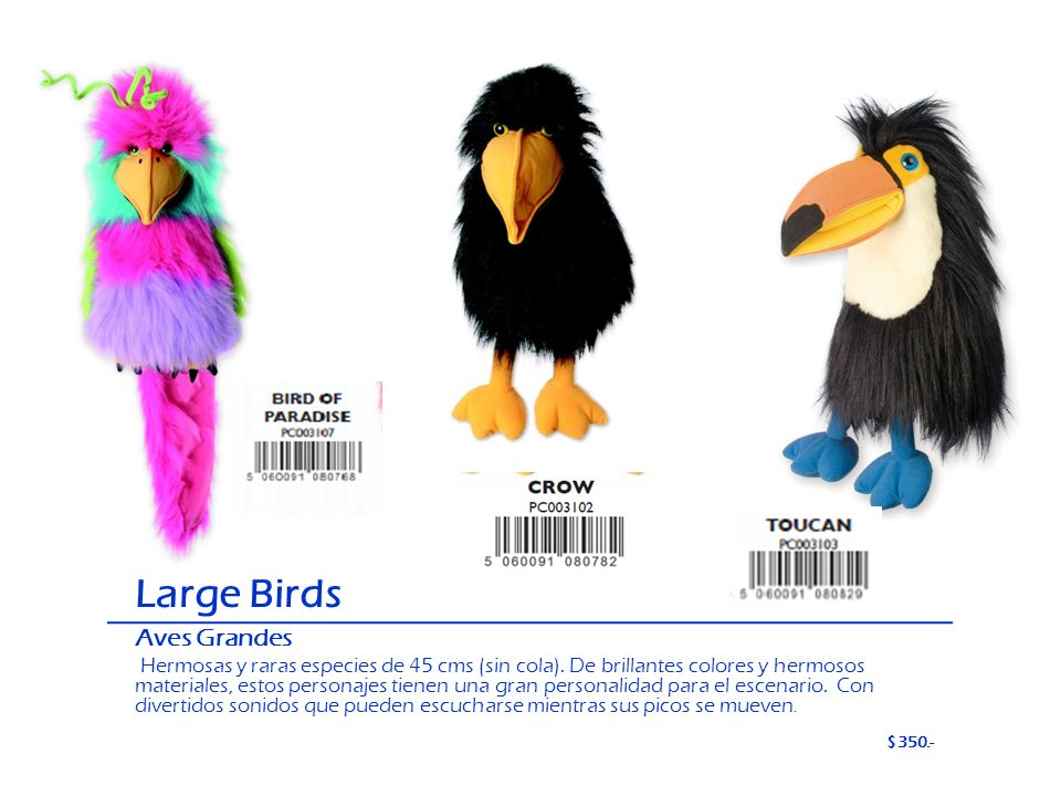 Large Birds Aves Grandes