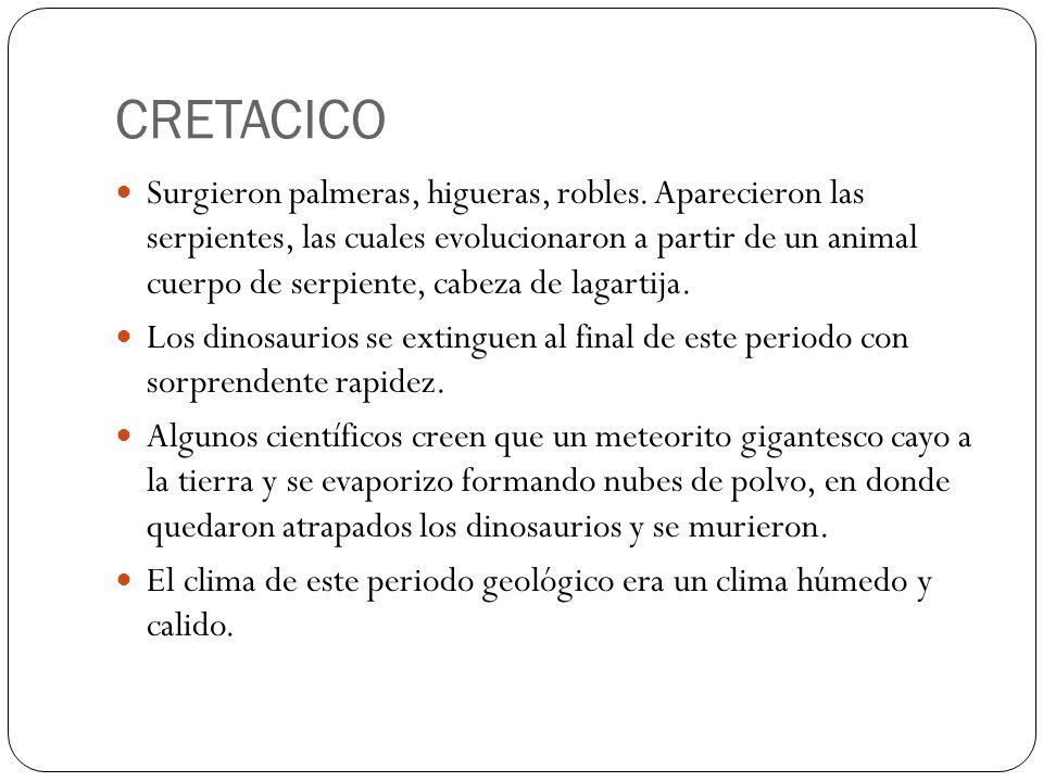 CRETACICO