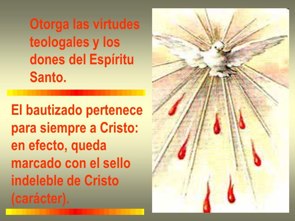 Otorga las virtudesteologales y los. dones del Espíritu. Santo. El bautizado pertenece. para siempre a Cristo: