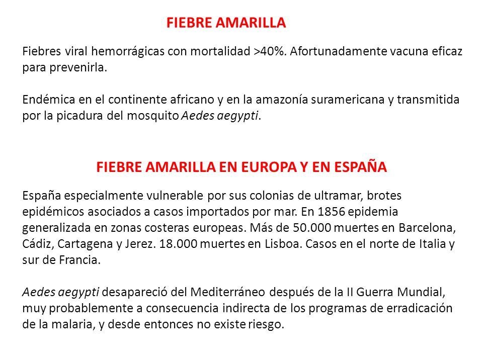 FIEBRE AMARILLA EN EUROPA Y EN ESPAÑA