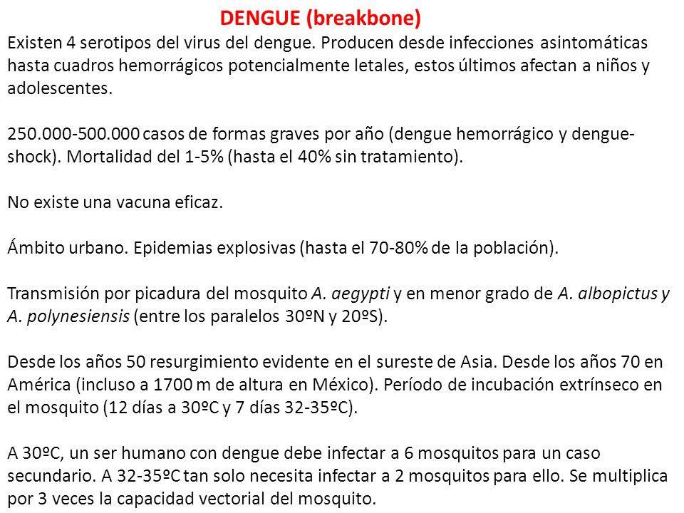 DENGUE (breakbone)