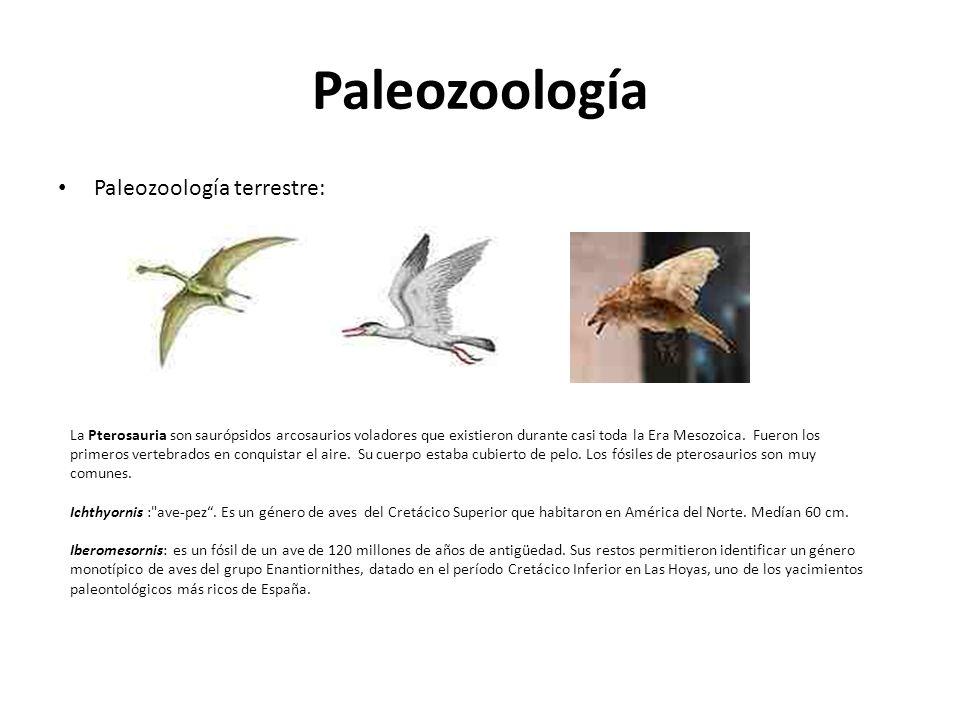 Paleozoología Paleozoología terrestre: