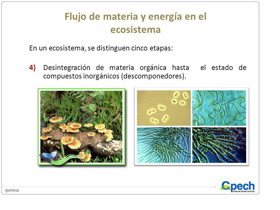 Flujo de materia y energía en el ecosistema