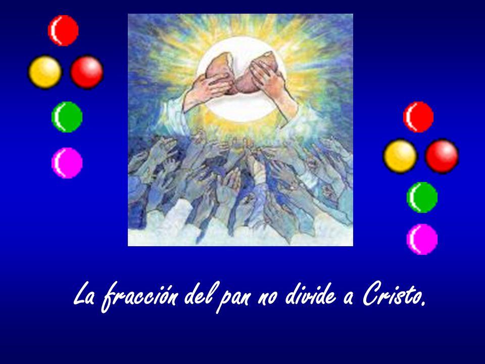La fracción del pan no divide a Cristo.