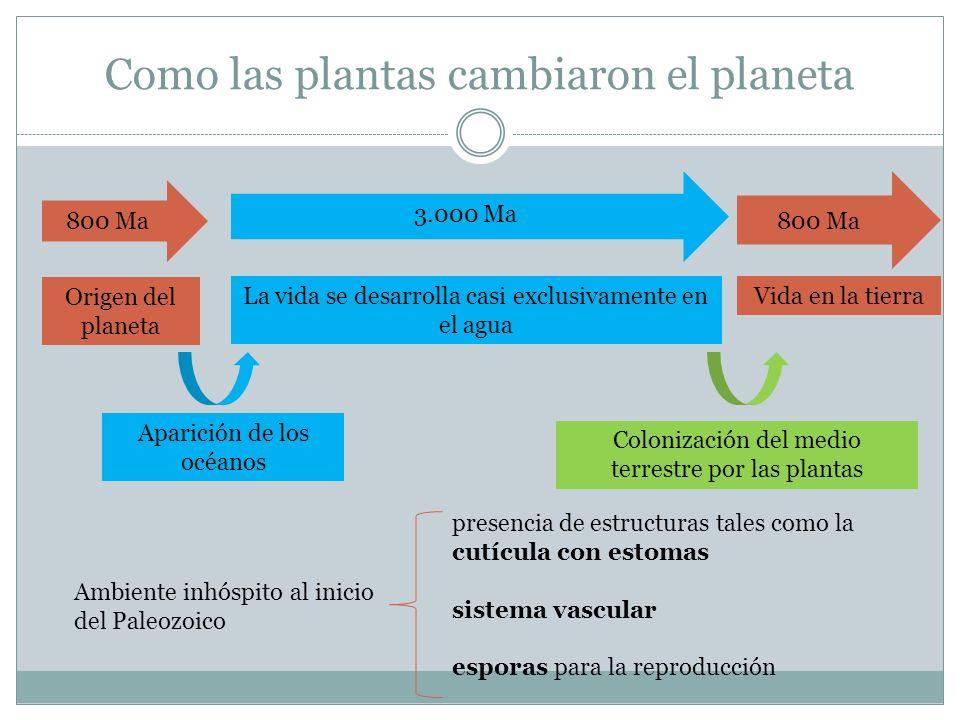 Como las plantas cambiaron el planeta