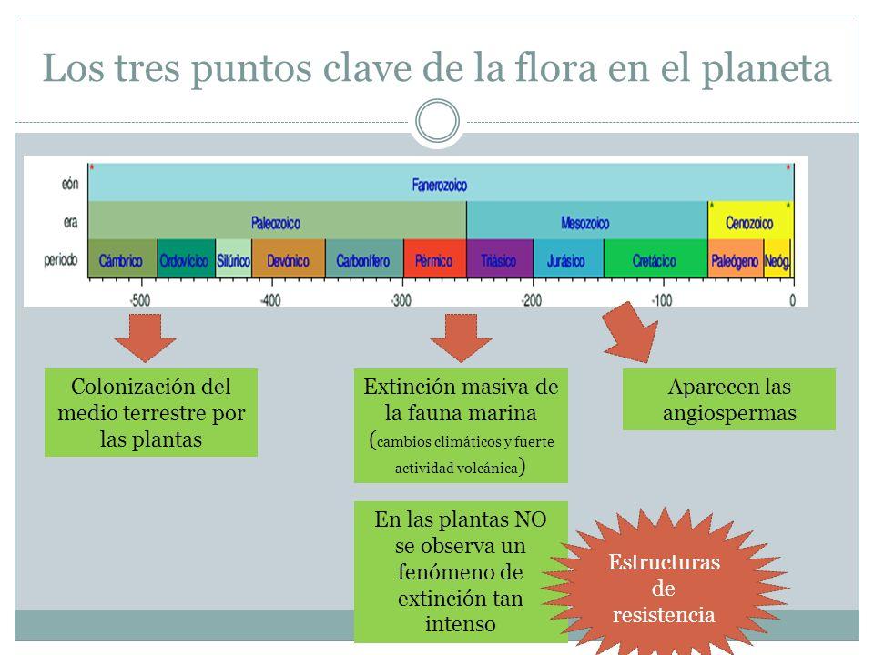 Los tres puntos clave de la flora en el planeta