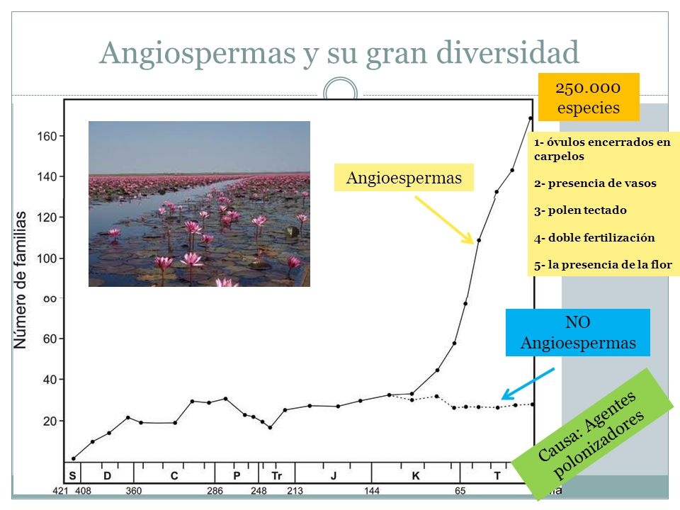 Angiospermas y su gran diversidad