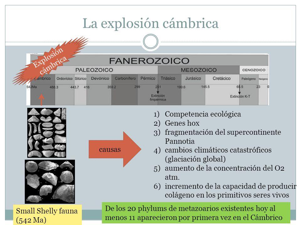 La explosión cámbrica Explosión cámbrica Competencia ecológica