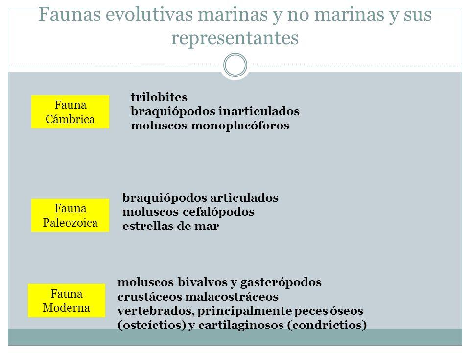 Faunas evolutivas marinas y no marinas y sus representantes