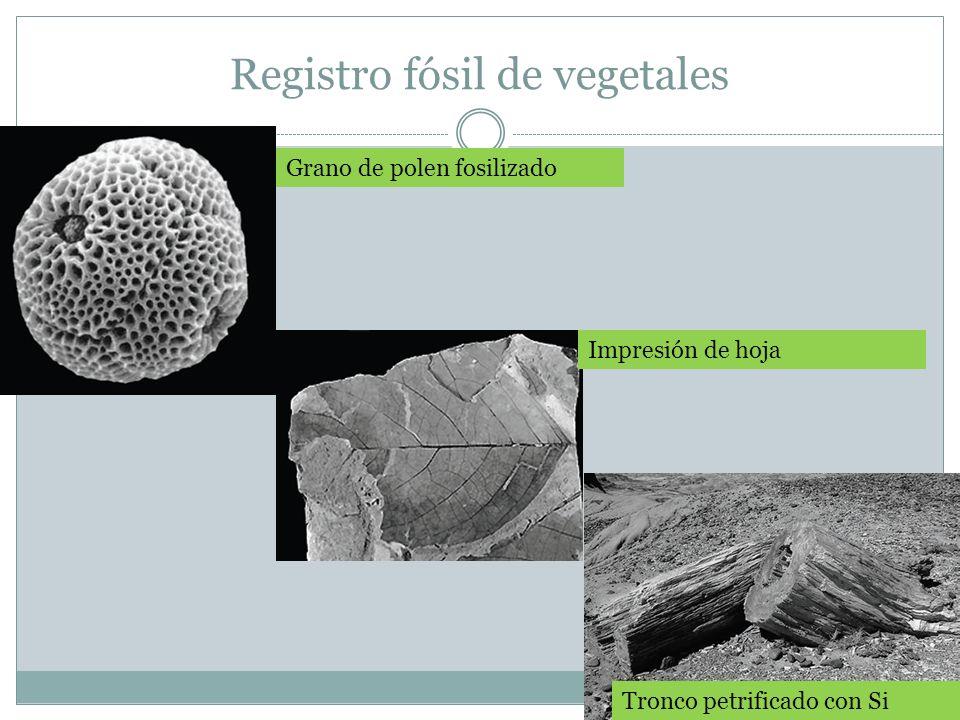 Registro fósil de vegetales
