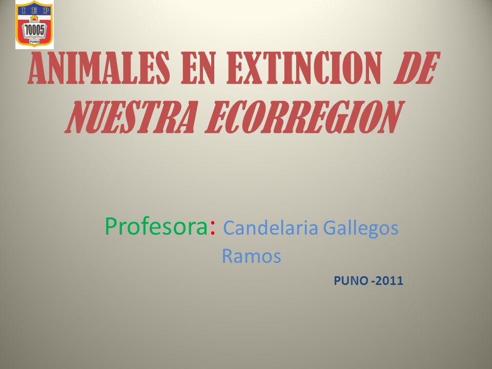 ANIMALES EN EXTINCION DE NUESTRA ECORREGION