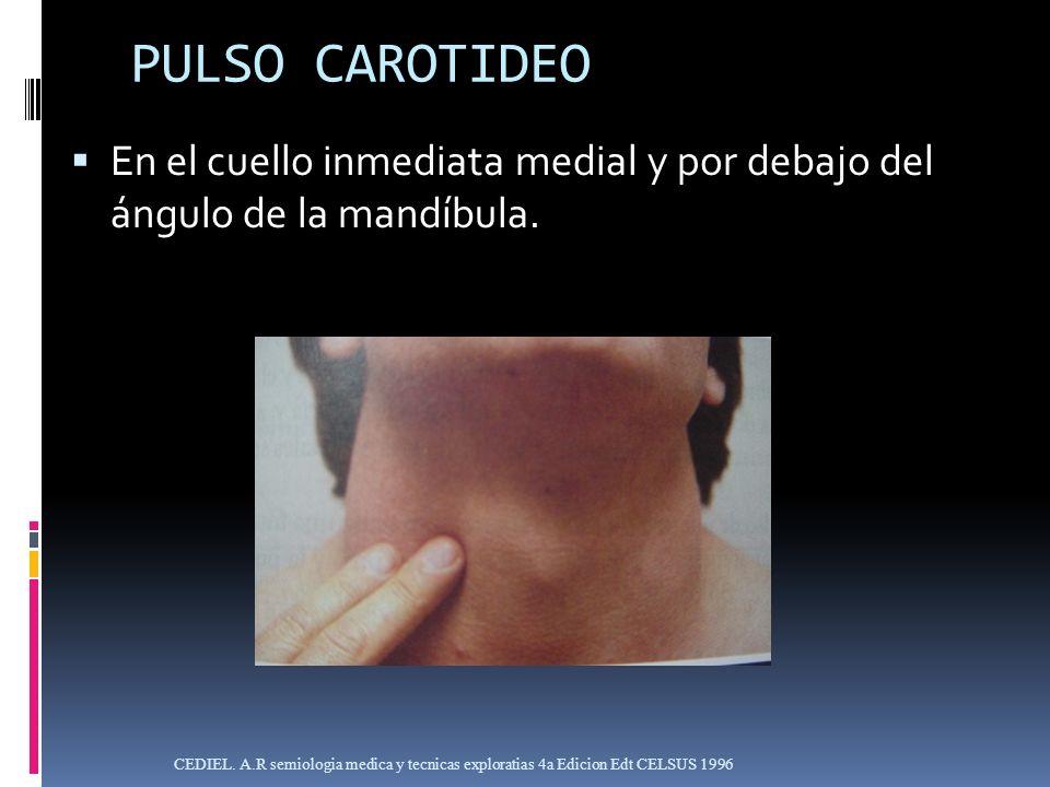 PULSO CAROTIDEO En el cuello inmediata medial y por debajo del ángulo de la mandíbula.
