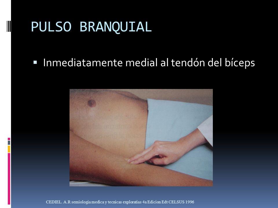 PULSO BRANQUIAL Inmediatamente medial al tendón del bíceps