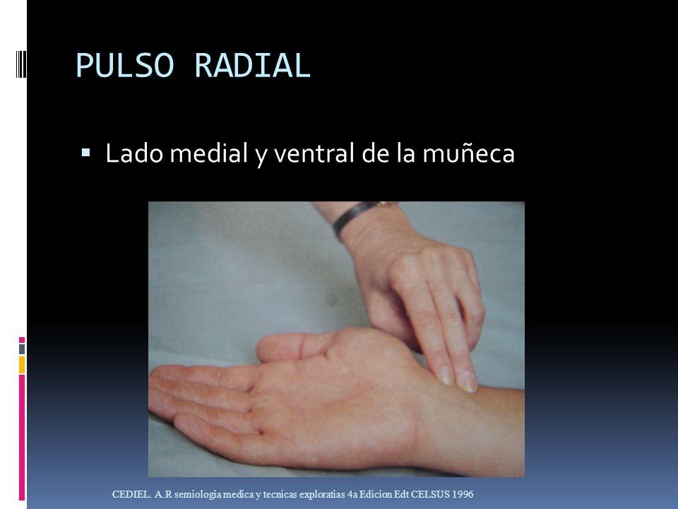 PULSO RADIAL Lado medial y ventral de la muñeca