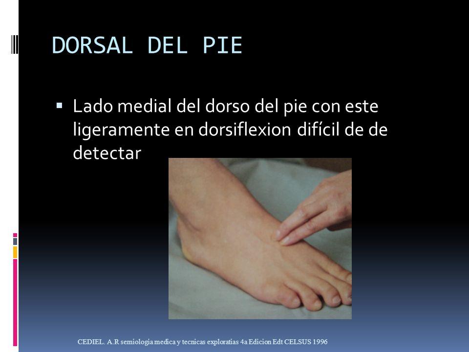 DORSAL DEL PIELado medial del dorso del pie con este ligeramente en dorsiflexion difícil de de detectar.