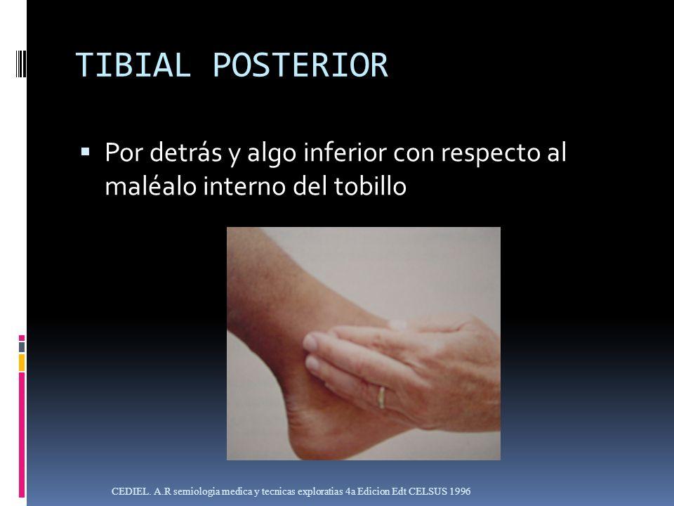 TIBIAL POSTERIOR Por detrás y algo inferior con respecto al maléalo interno del tobillo.