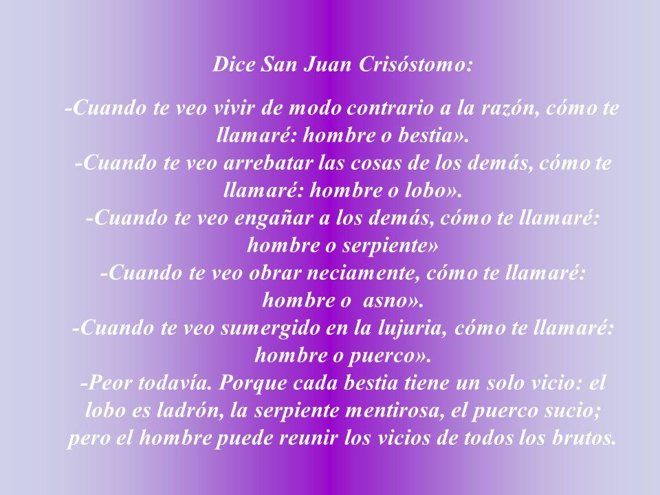 Dice San Juan Crisóstomo: