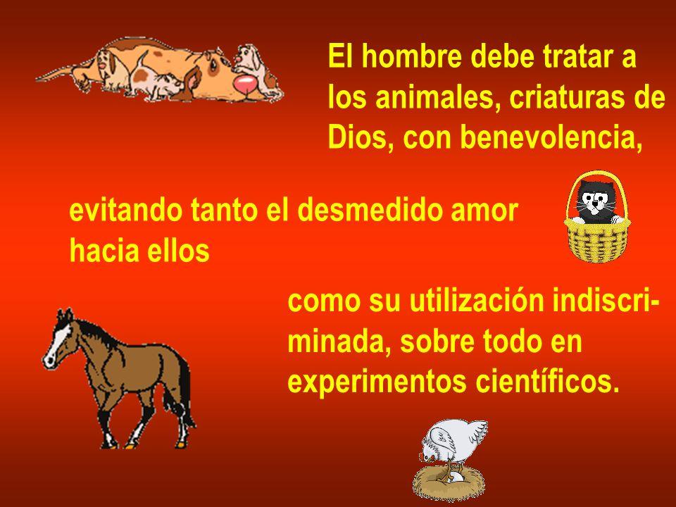 El hombre debe tratar alos animales, criaturas de. Dios, con benevolencia, evitando tanto el desmedido amor.