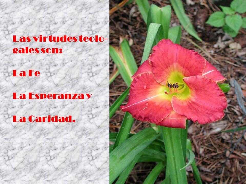 Las virtudes teolo- gales son: La Fe La Esperanza y La Caridad.