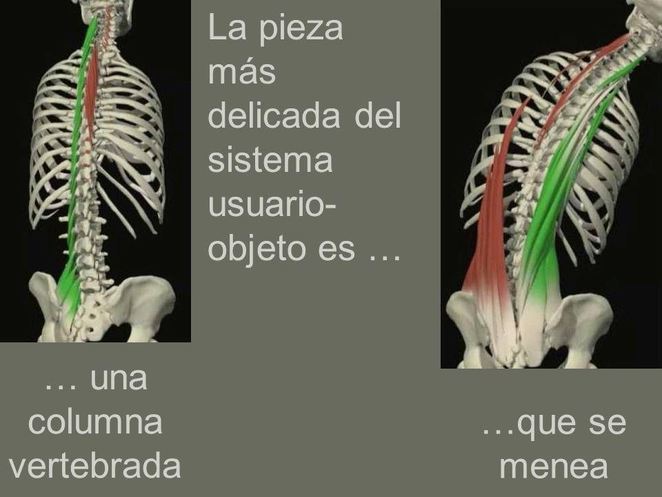 … una columna vertebrada