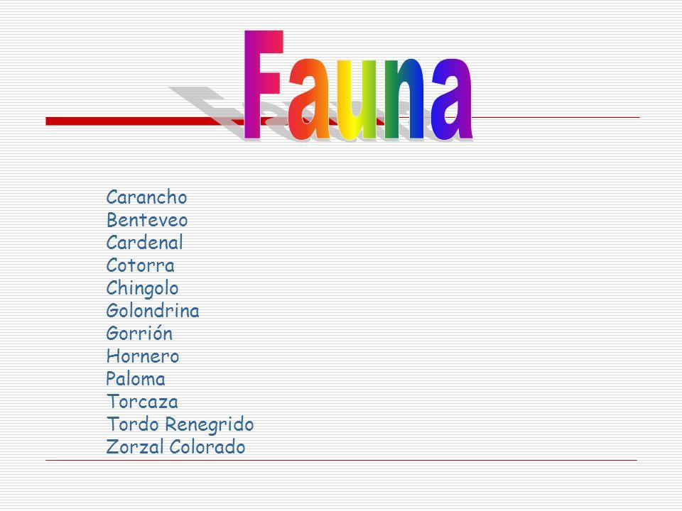 Fauna Carancho Benteveo Cardenal Cotorra Chingolo Golondrina Gorrión