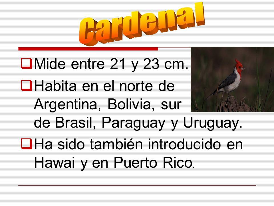 Ha sido también introducido en Hawai y en Puerto Rico.