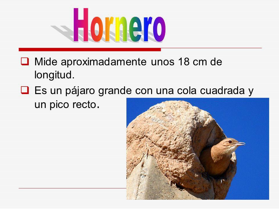 Hornero Mide aproximadamente unos 18 cm de longitud.