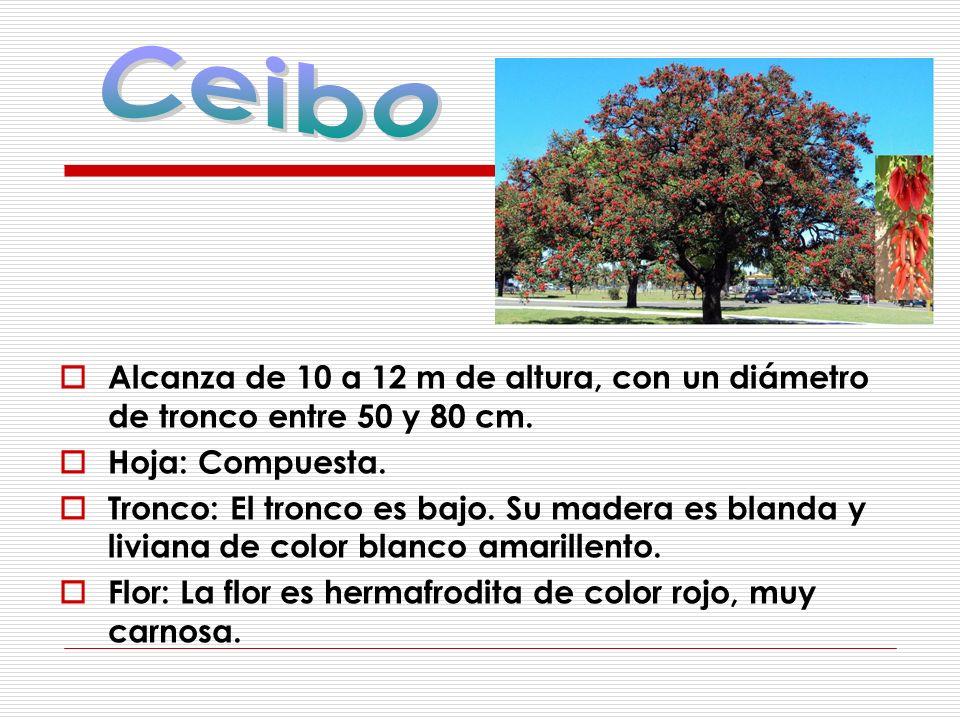 Ceibo Alcanza de 10 a 12 m de altura, con un diámetro de tronco entre 50 y 80 cm. Hoja: Compuesta.