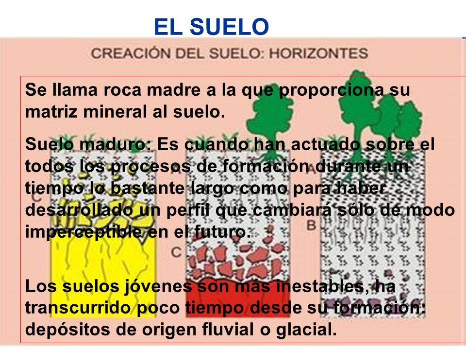 EL SUELO Se llama roca madre a la que proporciona su matriz mineral al suelo.