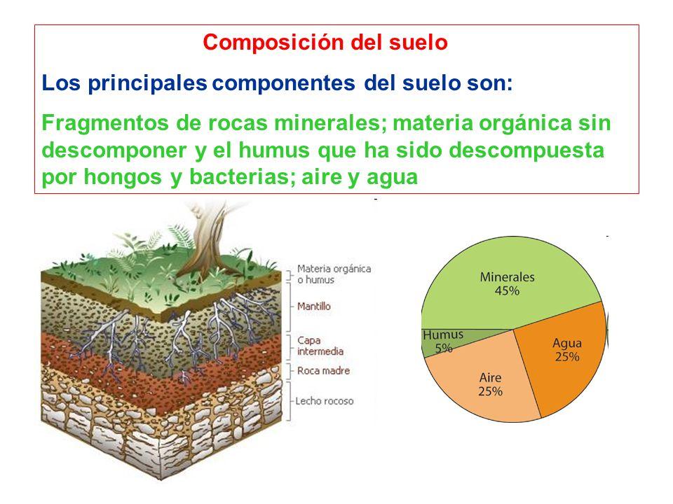 Composición del suelo Los principales componentes del suelo son: