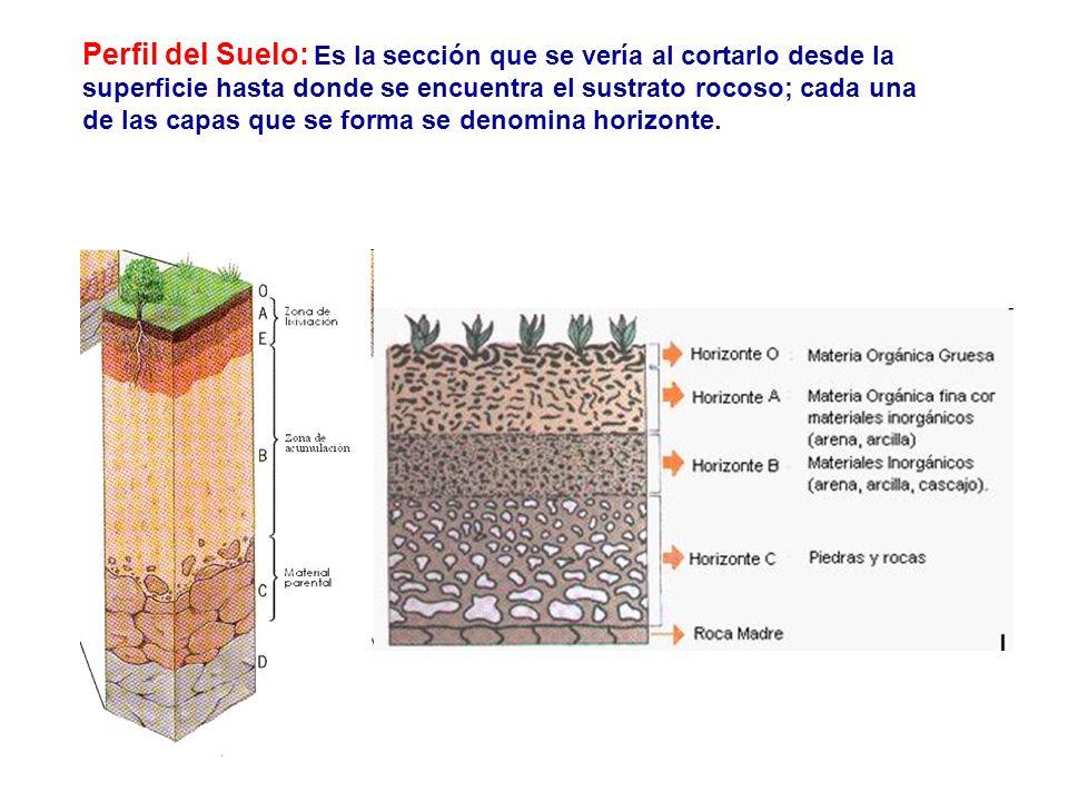 Perfil del Suelo: Es la sección que se vería al cortarlo desde la superficie hasta donde se encuentra el sustrato rocoso; cada una de las capas que se forma se denomina horizonte.