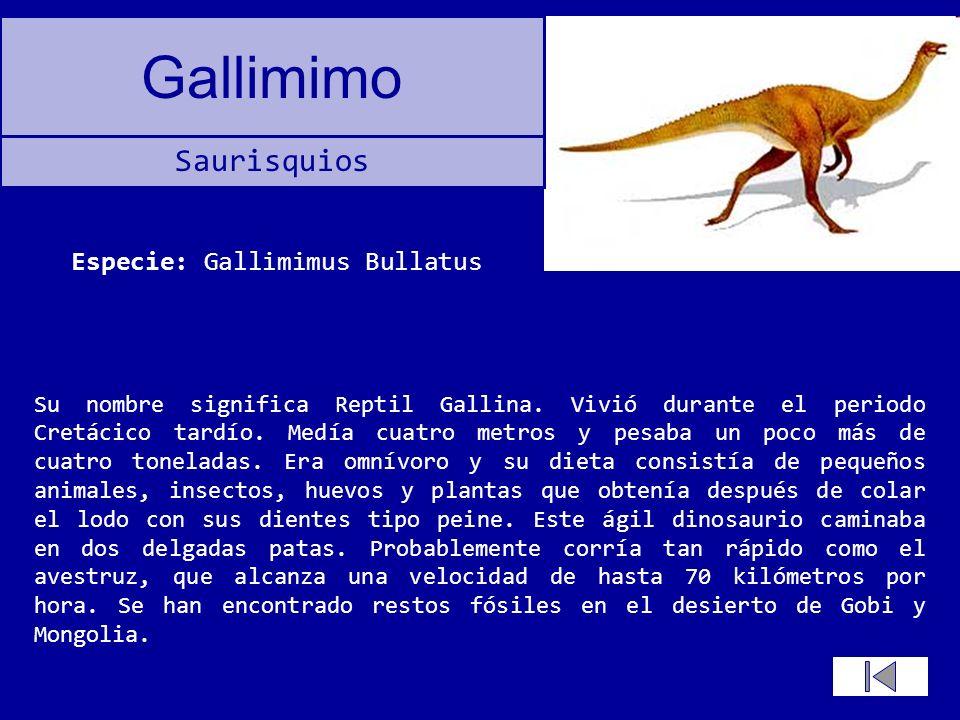 Especie: Gallimimus Bullatus