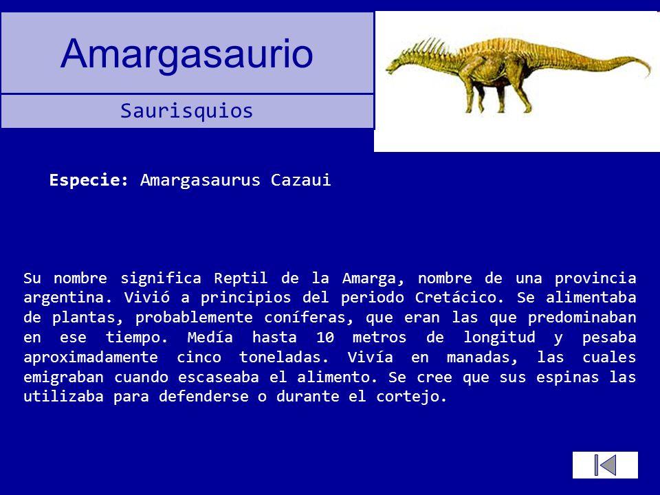 Especie: Amargasaurus Cazaui