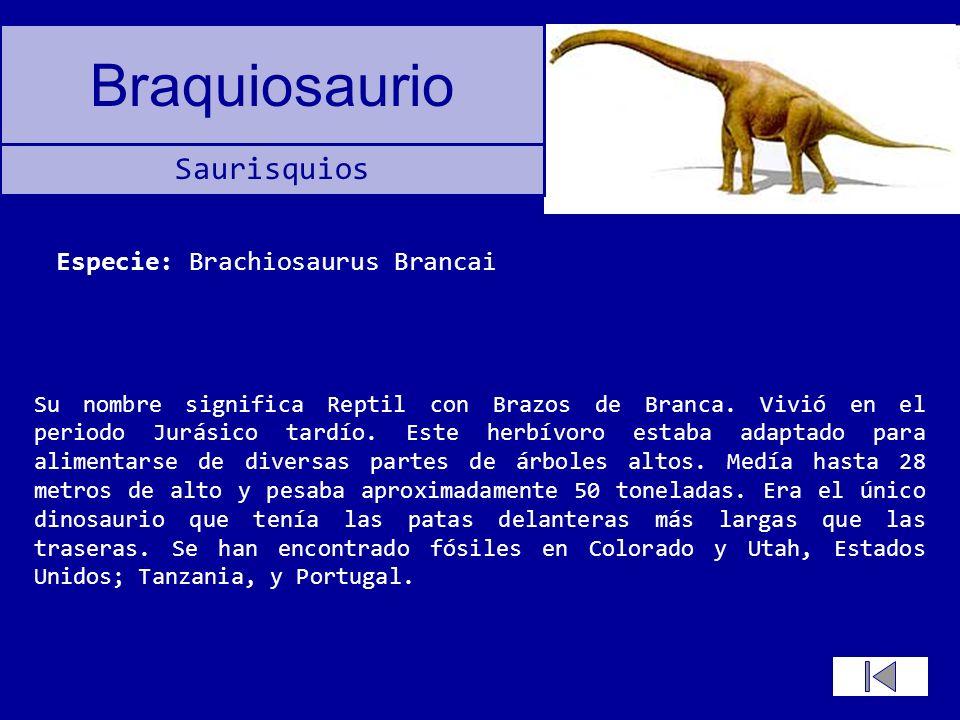 Especie: Brachiosaurus Brancai
