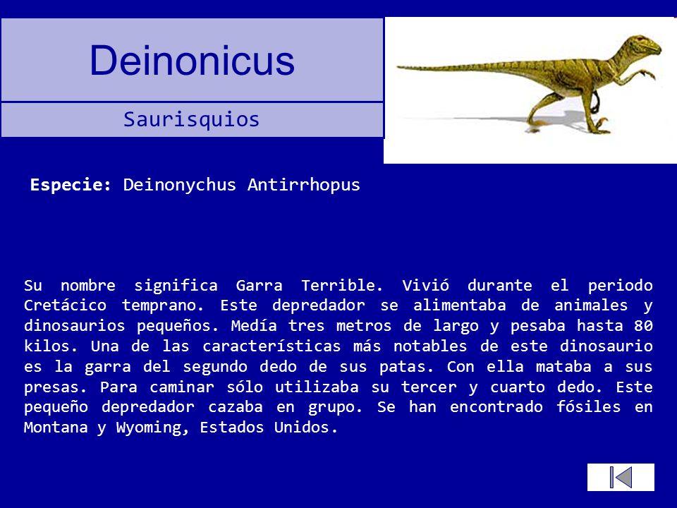 Especie: Deinonychus Antirrhopus