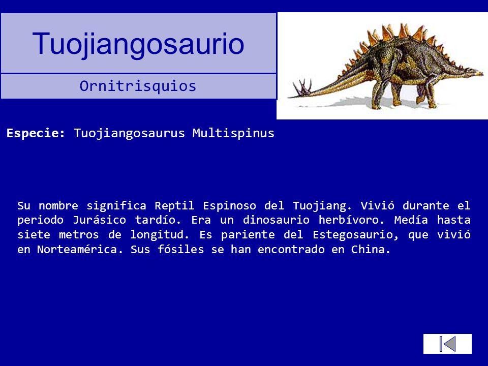 Especie: Tuojiangosaurus Multispinus