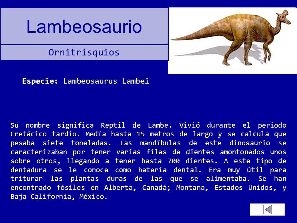 Especie: Lambeosaurus Lambei