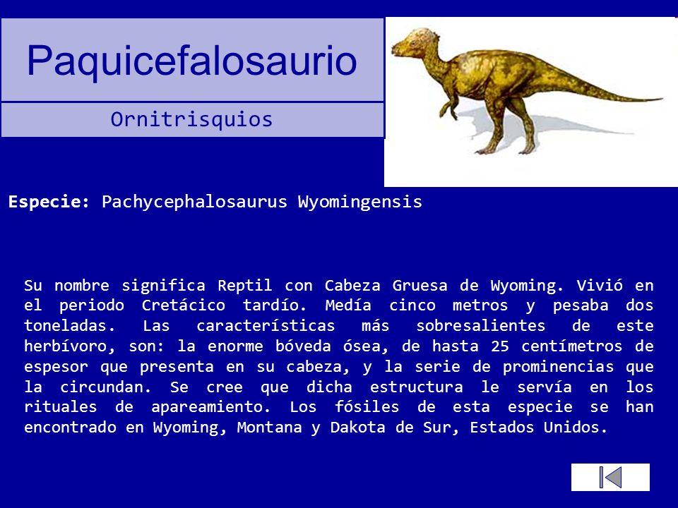 Especie: Pachycephalosaurus Wyomingensis