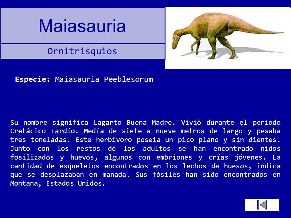Especie: Maiasauria Peeblesorum