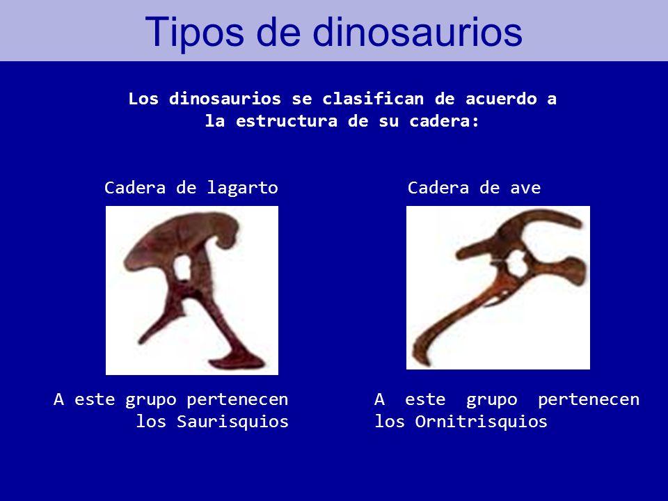 Los dinosaurios se clasifican de acuerdo a la estructura de su cadera: