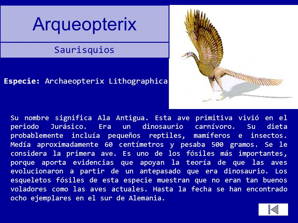 Especie: Archaeopterix Lithographica