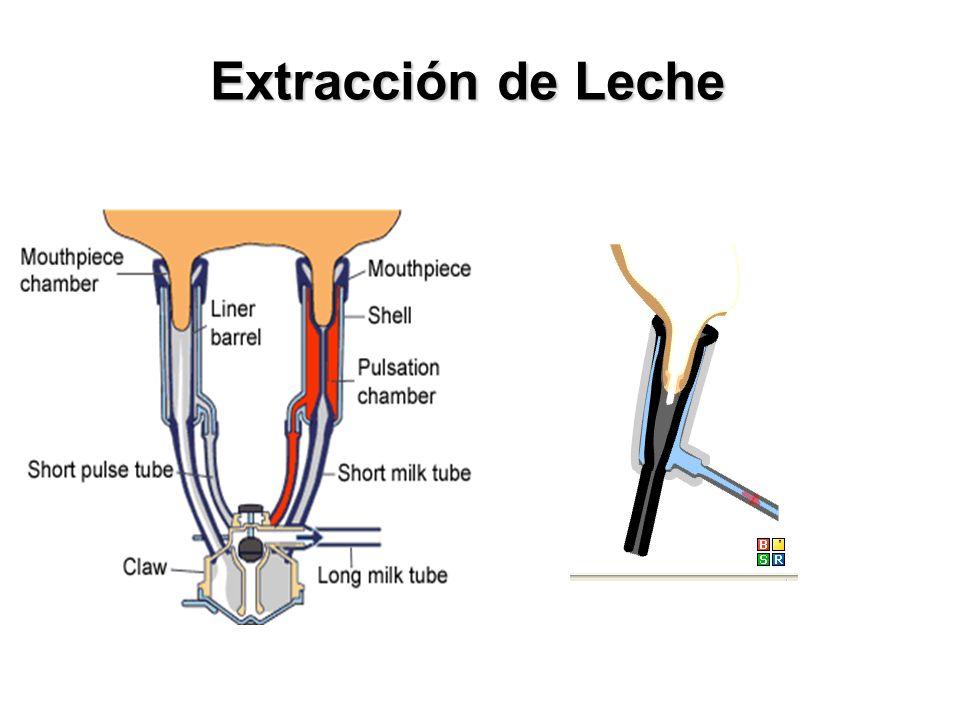 Extracción de Leche