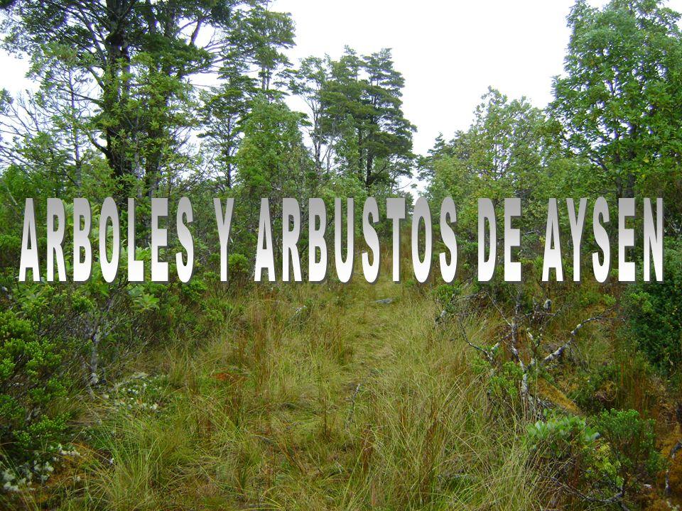 ARBOLES Y ARBUSTOS DE AYSEN