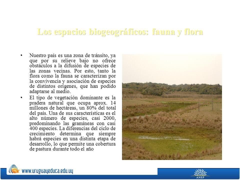 Los espacios biogeográficos: fauna y flora